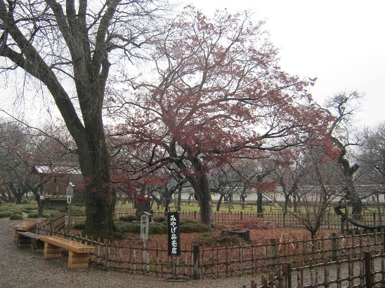 MUSEO IBARAKI MITO